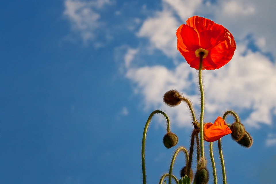 Memorial weekend Mattress Sales Poppy