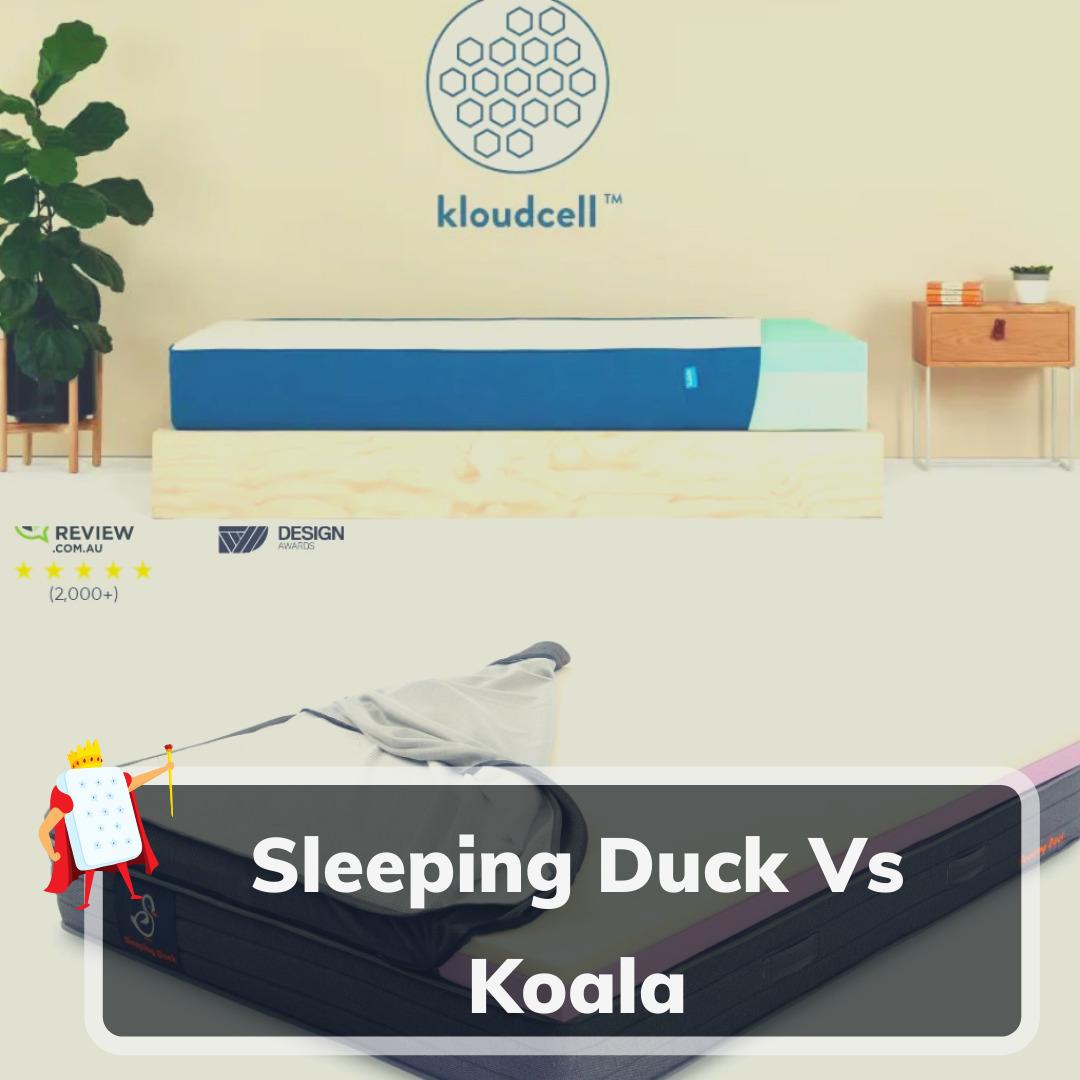 Sleeping Duck Vs Koala - Feature Image